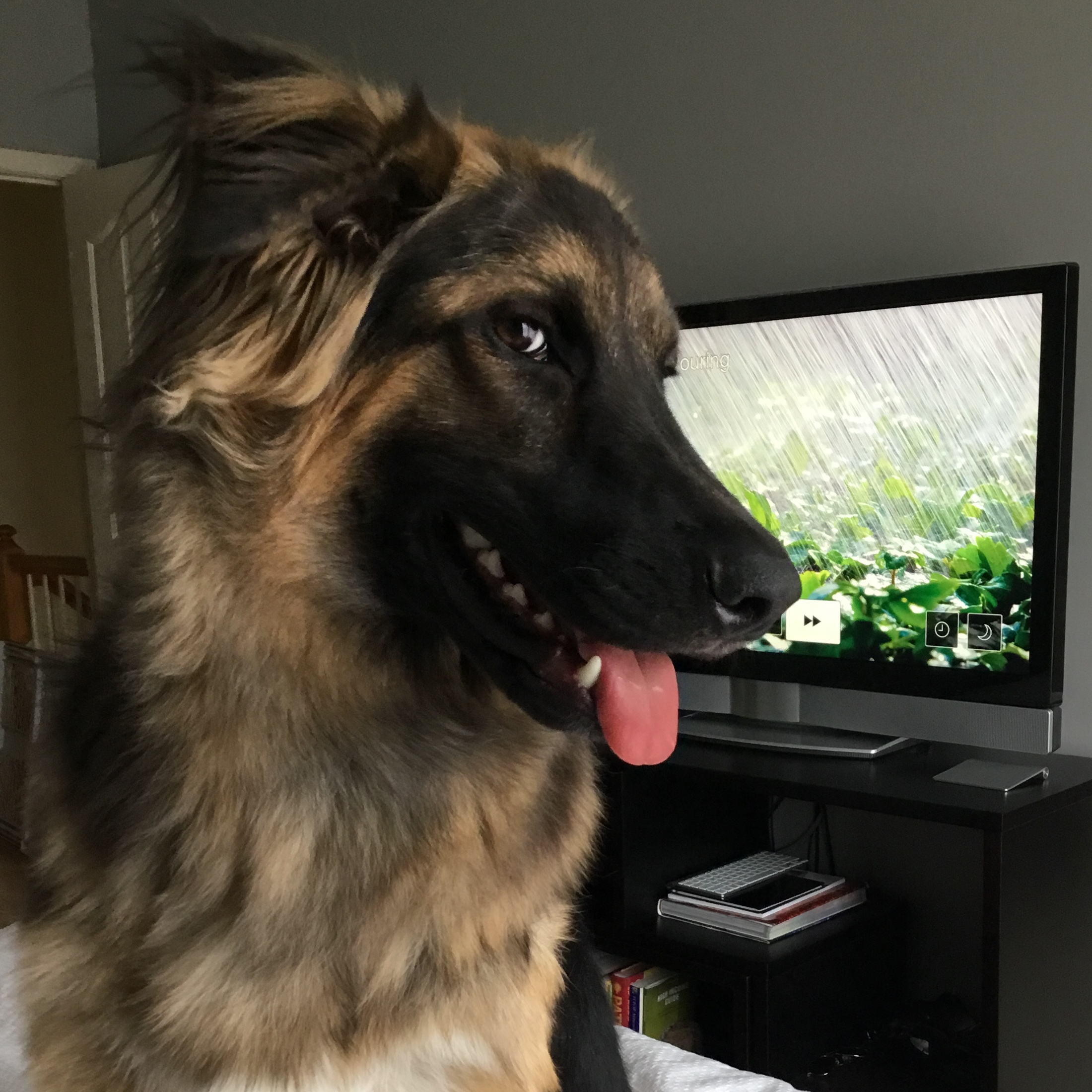 Happy pet with white noise playing on the tv