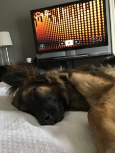 Dog falls asleep to Brown Noise with the White Noise Apple TV app