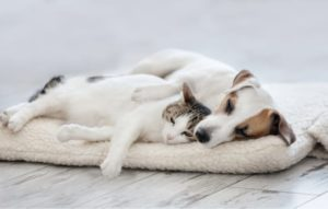 dog and cat napping on a pet bed